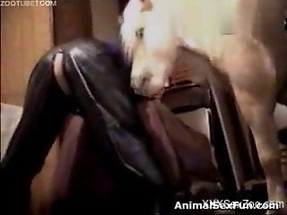 Insolent female humped by pony in crazy xxx zoophilia video