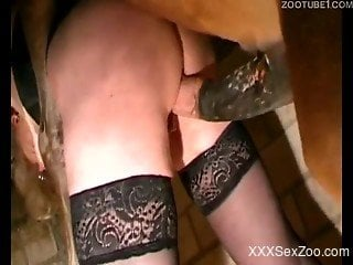 Black stockings chick gets fucked by a hung horse