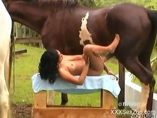 Amazing horse bangs a long-legged female in zoo XXX
