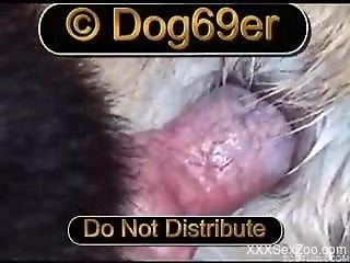 Close-up video where dog's bulge slides into hole of another...