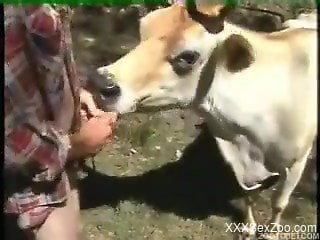 Man slides dick in cow's mouth then in its ass