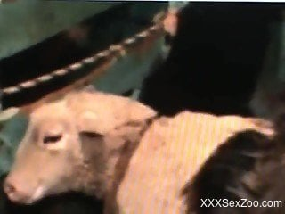 Hot goat sex zoo scenes in brutal manners