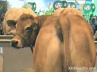 Kinky cow showing off its big, juicy ass on cam