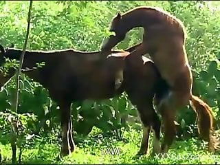 Stallion fucks female horse and zoo lover tapes it
