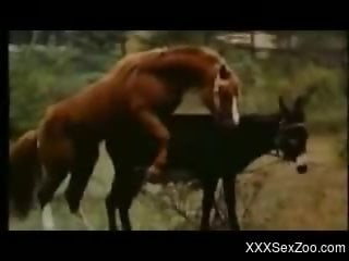 Sexy horse-on-horse fucking video with riveting close-ups