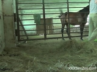 Kinky zoophile is filming horses at the farm