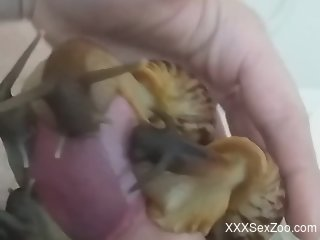 Dude lets sexy snails slither all over his cock