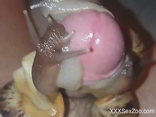 Hot dude cannot stop fucking snails in POV