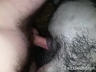 Dude buries his cock deep inside this animal's hole