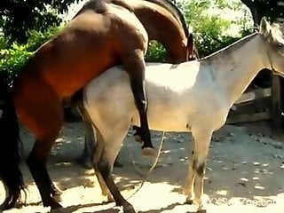 Two horses enjoy a wild fuck session outdoors