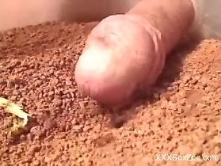 Dude with a nice-looking cock fools around with ants