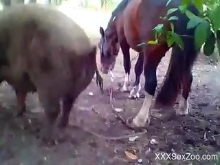 Well-endowed stallion fucking a horny animal from behind