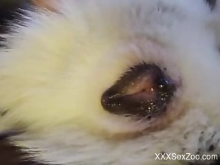 Animal pussy exposed and fingered in an intense way