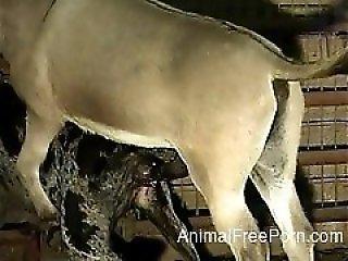Zoo Videos de X